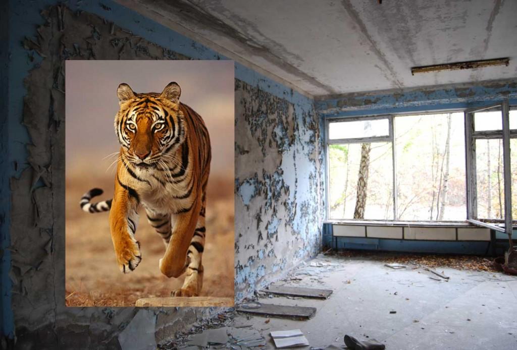 tijger_1