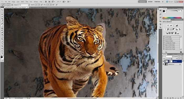 tijger_4