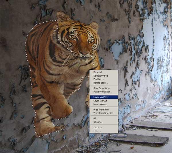 tijger_5